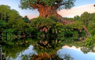 Tree of Life at the center of Animal Kingdom, Walt Disney World